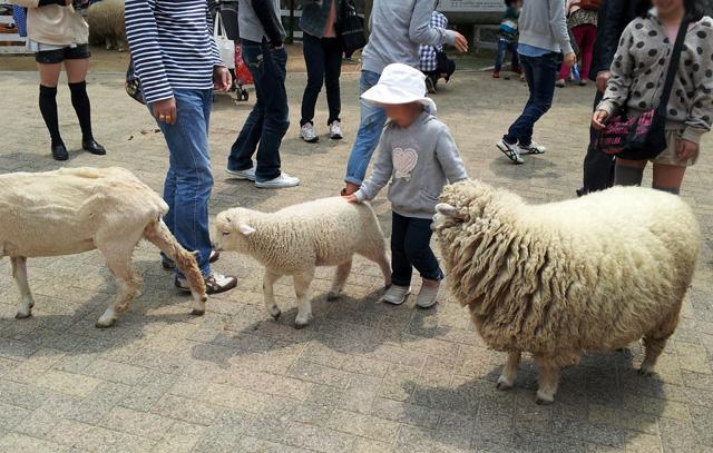 羊とのふれあい